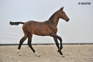 Zirkoon x Jazz de Cocqerie2012