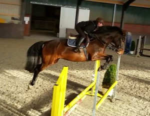 Testing young mares (H Amelusina 3,5 jr Rubert x Calando x Coriander)