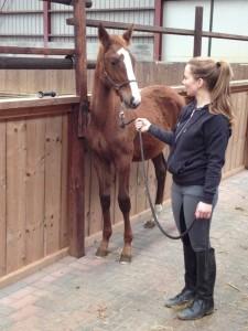 early foal handling